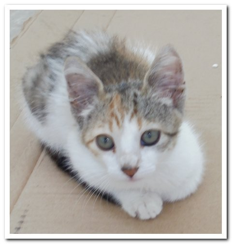 adopt6.jpg