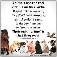 animals only.jpg
