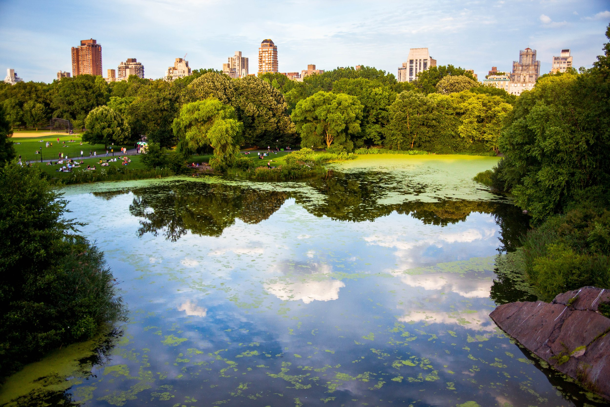 No matter where you choose to pause at Central Park, the experience is a tranquil one.