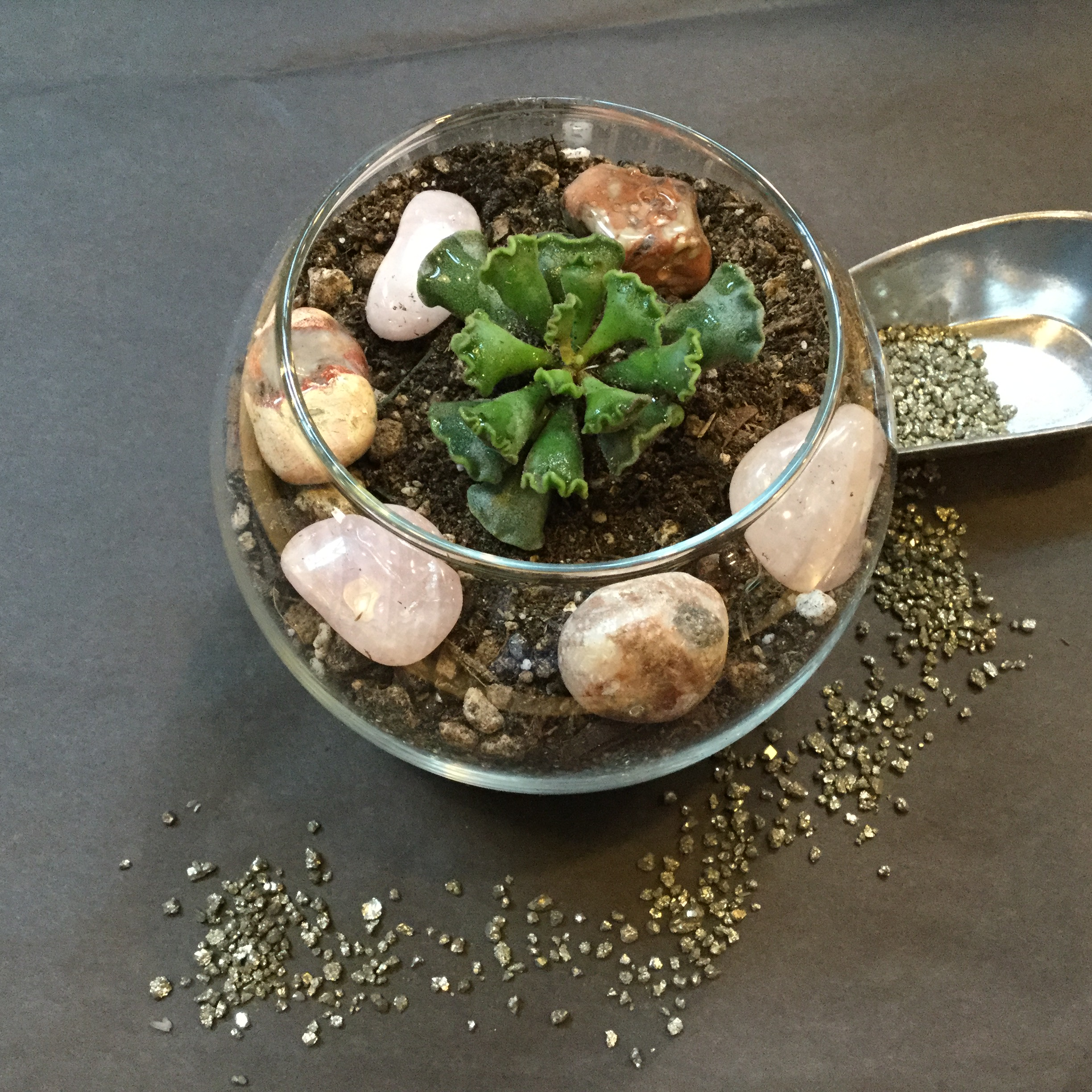 "Mini succulent garden in a 3"" container with (1) succulents, sand, and stones. $20 with tax"