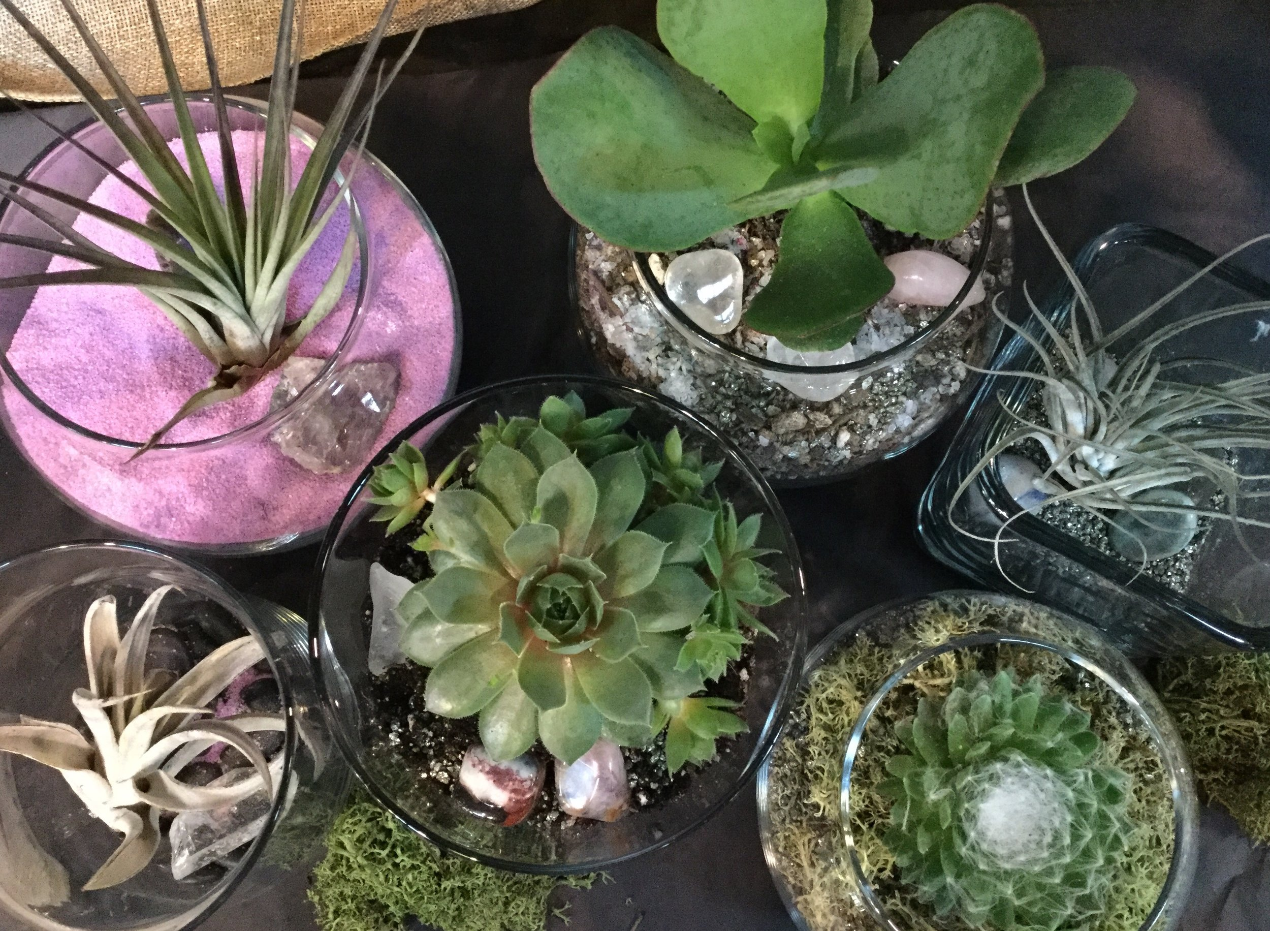 Mini succulent and air plant terrariums with sand and stones. $15-20 with tax