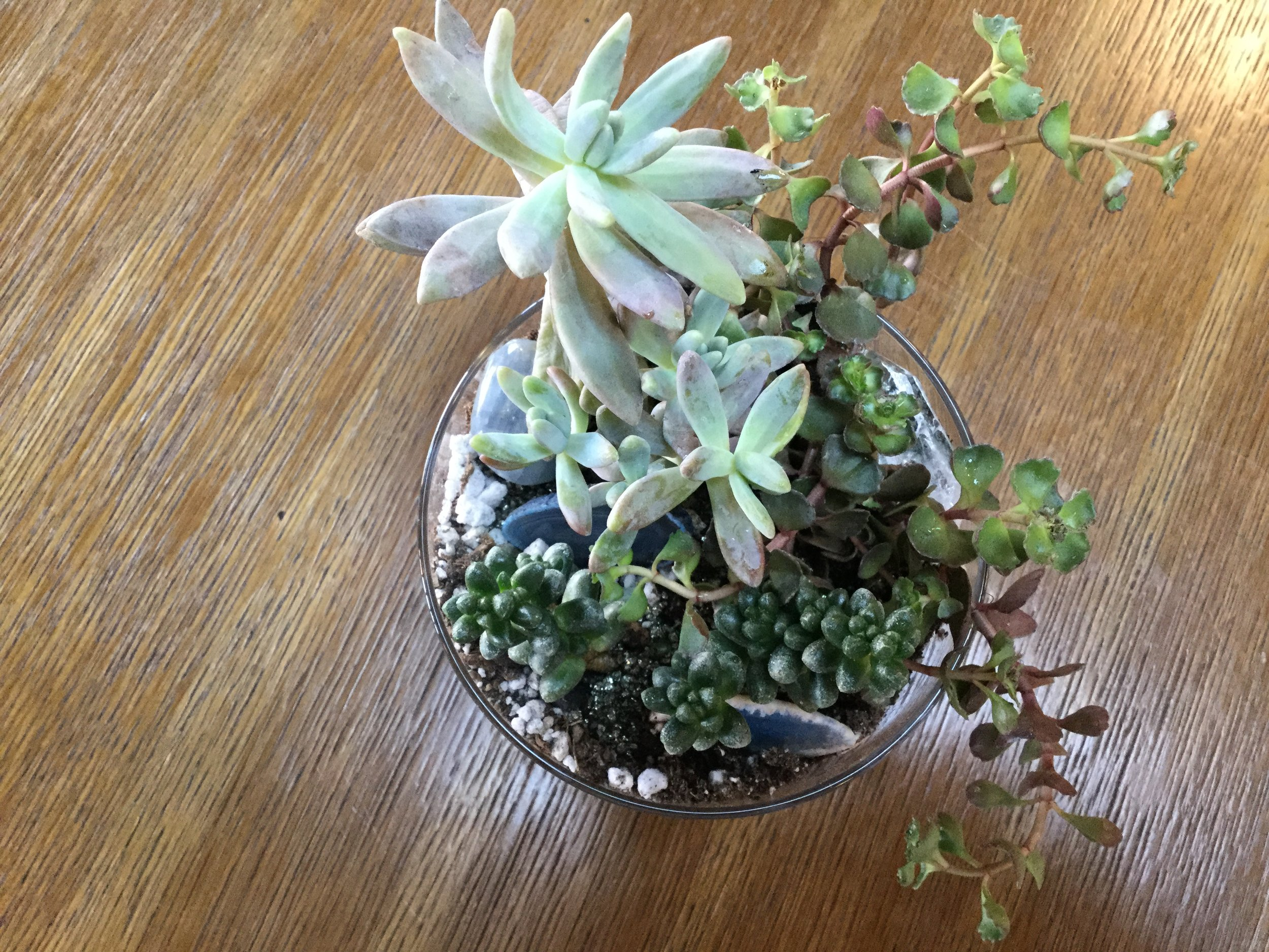 "Mini succulent garden in a 5"" container with (3) succulents, sand, and gemstones. $35 with tax"