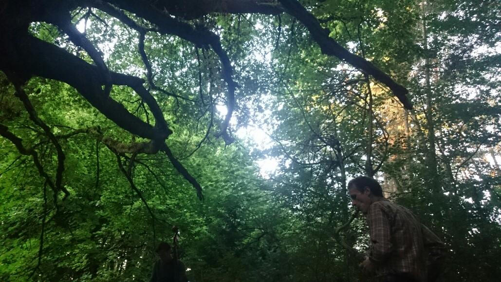 Neil+Welch+Secret+Forest+Show.jpeg