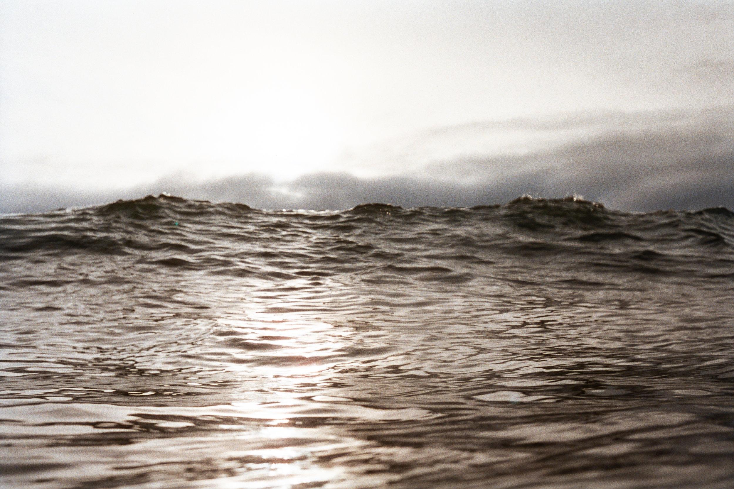 DTRTS Surfy 2016AA005.jpg