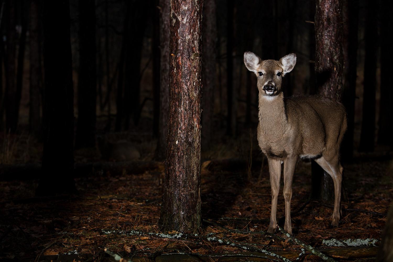 Deer- West Bend. 2015