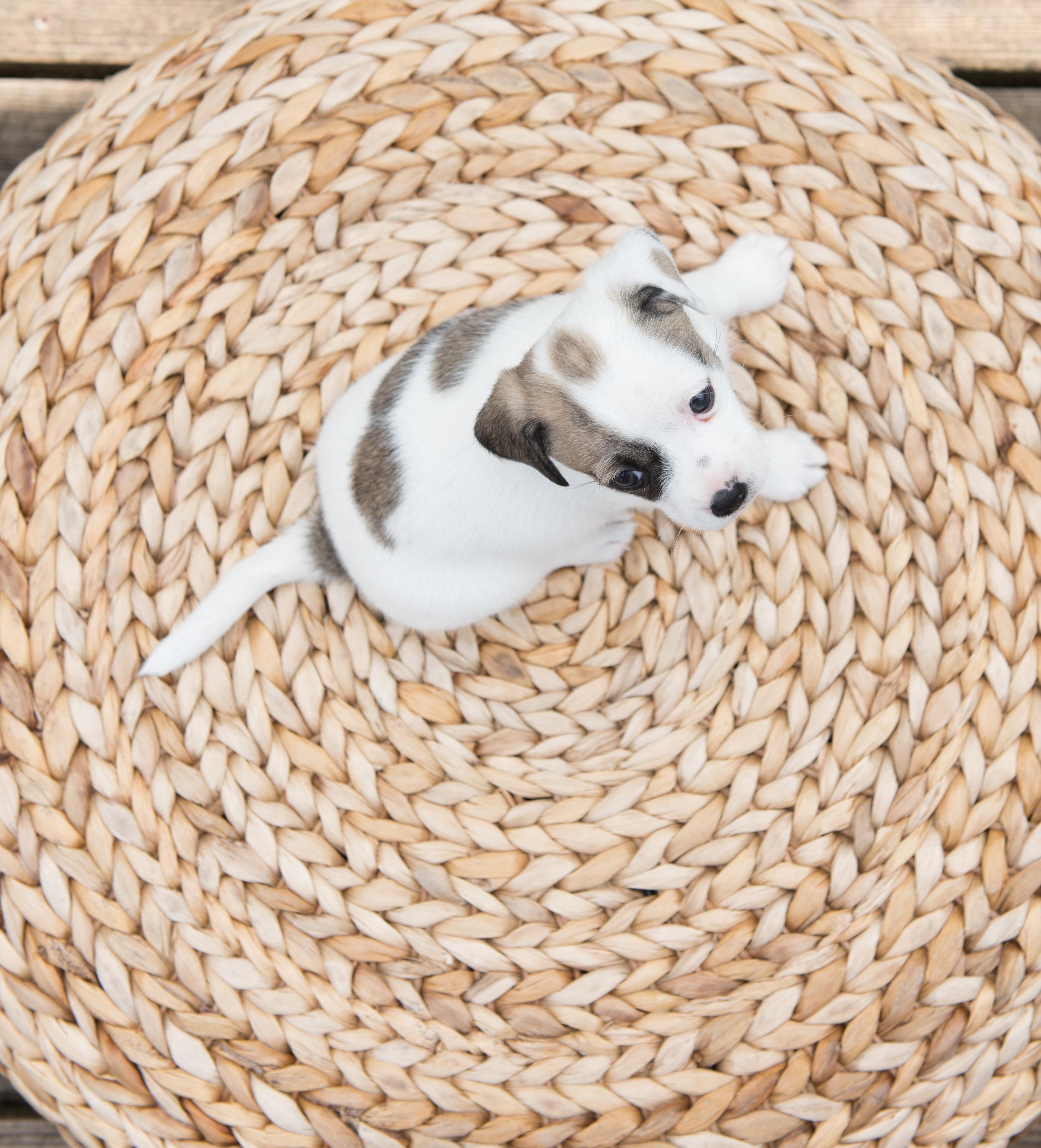 puppyroundandround.jpg