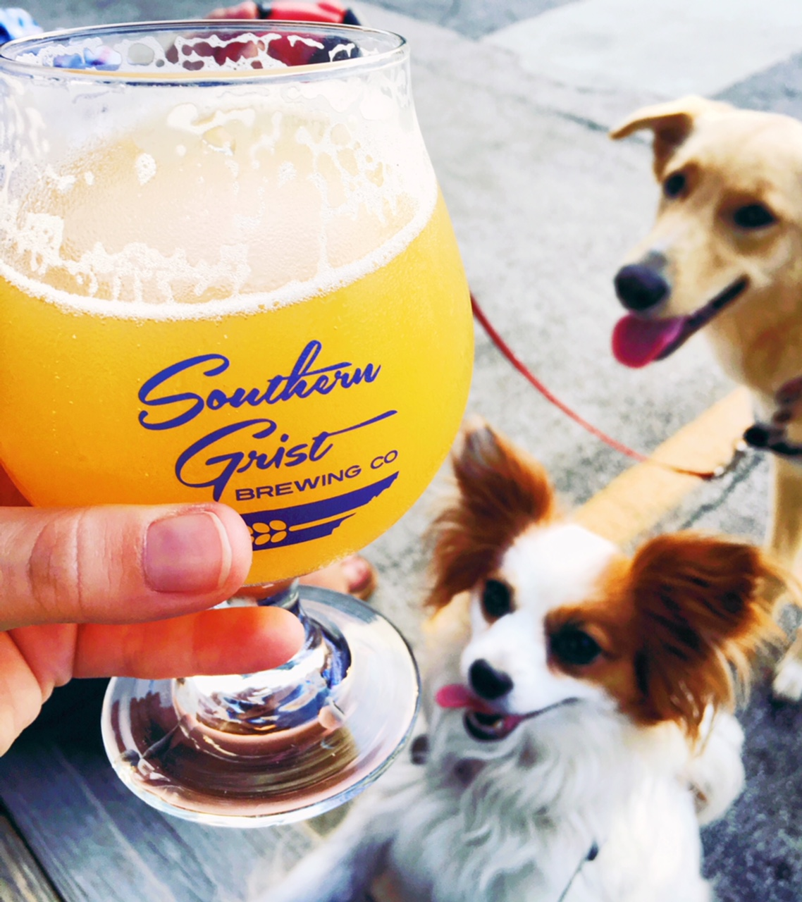 Southern Grist Brewing Co