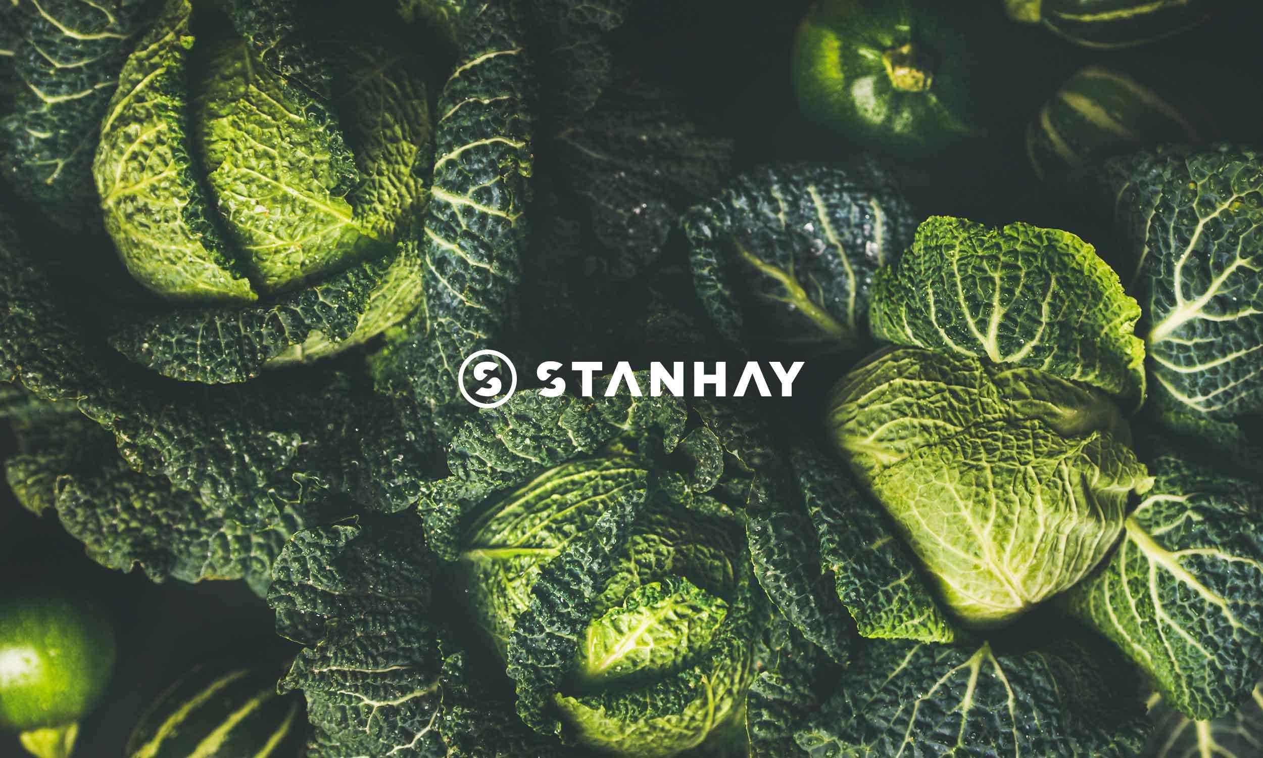 Stanhay-Brand-Identity.jpg