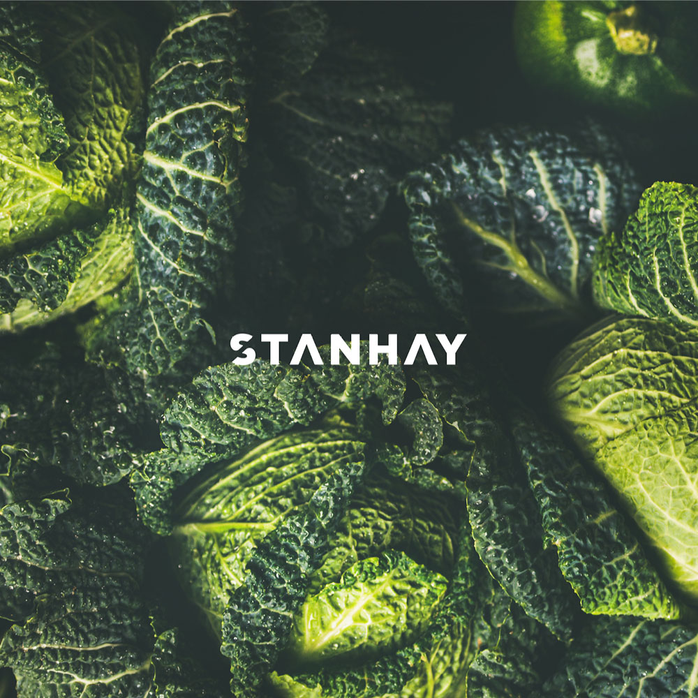 Stanhay  → Brand identity, Website & Promotional Collateral