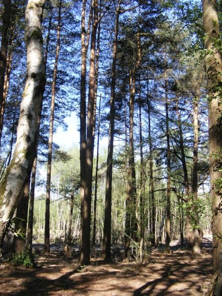 Trees in heathland
