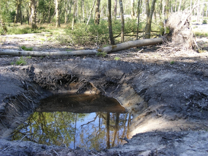 Fallen tree and water-filled hole