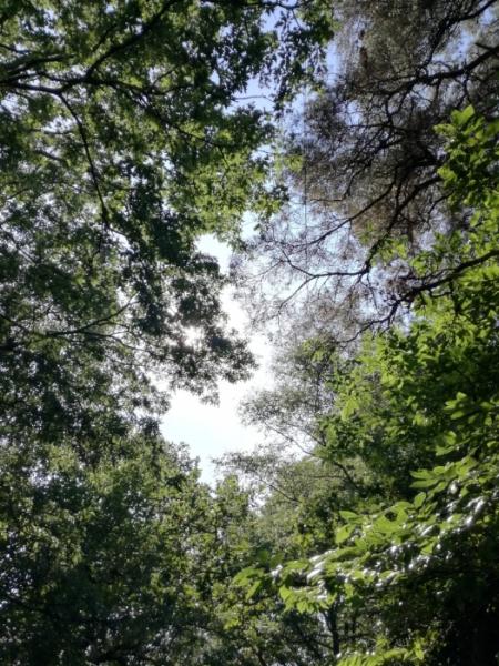 View through trees