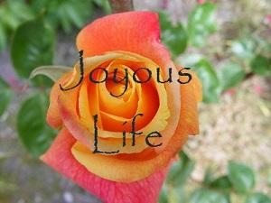 Squarespace - Joyous Life (Custom)1.jpg