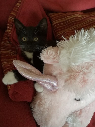 Baby Kito and Rosie the unicorn