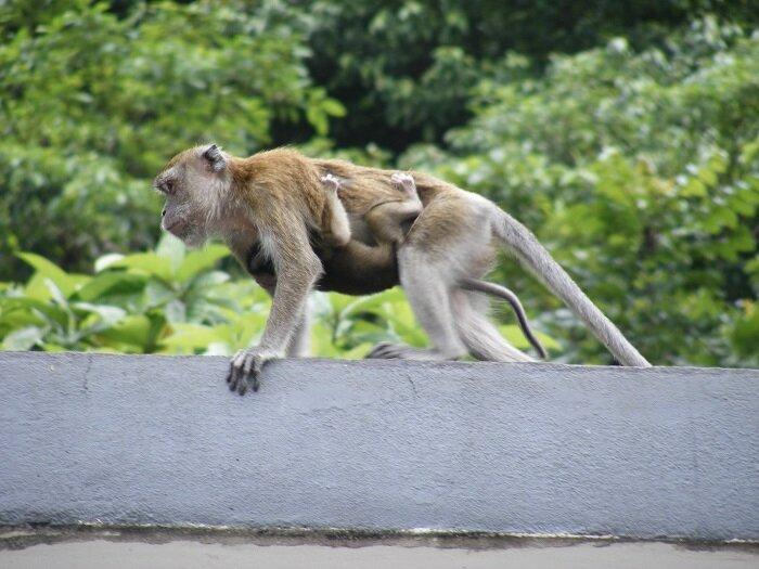 Monkey mama and baby