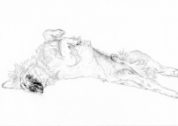 Buddy - Clumber Spaniel - 5inches x 7inches - Pencil sketch