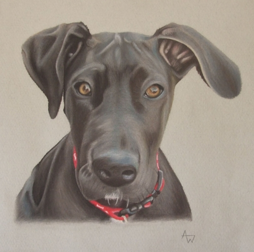 Snowflake - Great Dane puppy - A4 - Soft pastels