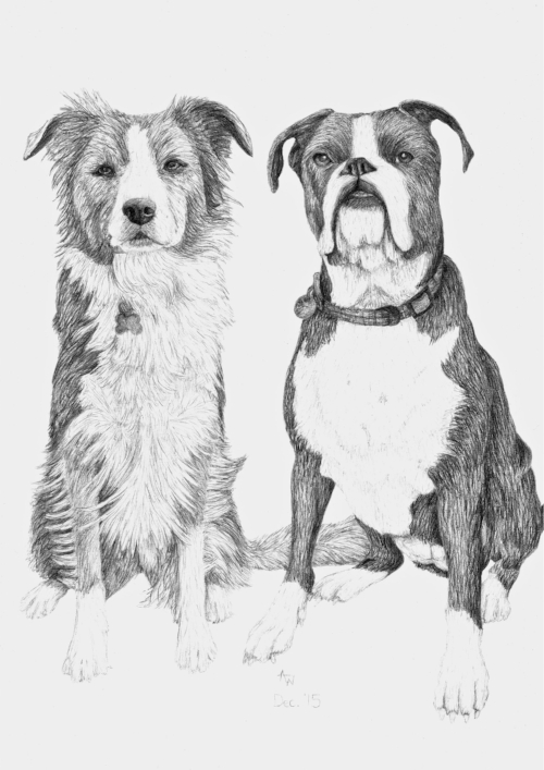 Collie and Boxer - A3 - Pencil sketch