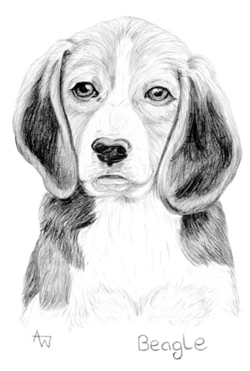 Beagle - Graphite pencils