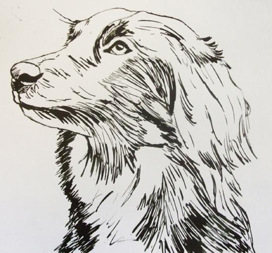 "Collie Cross - 10"" x 10"" - Ink sketch"