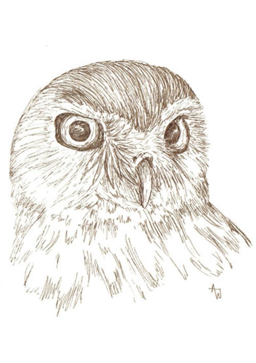 Burrowing Owl - Pen sketch