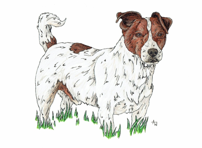 """Jack Russell - 10"""" x 8"""" - Pen and Watercolour"""