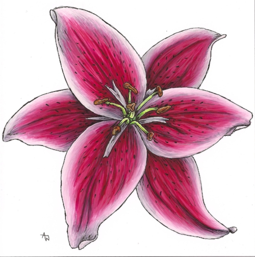 "Lillium - 6"" x 6"" - Watercolour and ink. Specially commissioned"