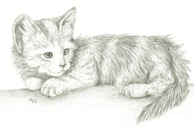 "Kitten - 5"" x 7"" - pencil"