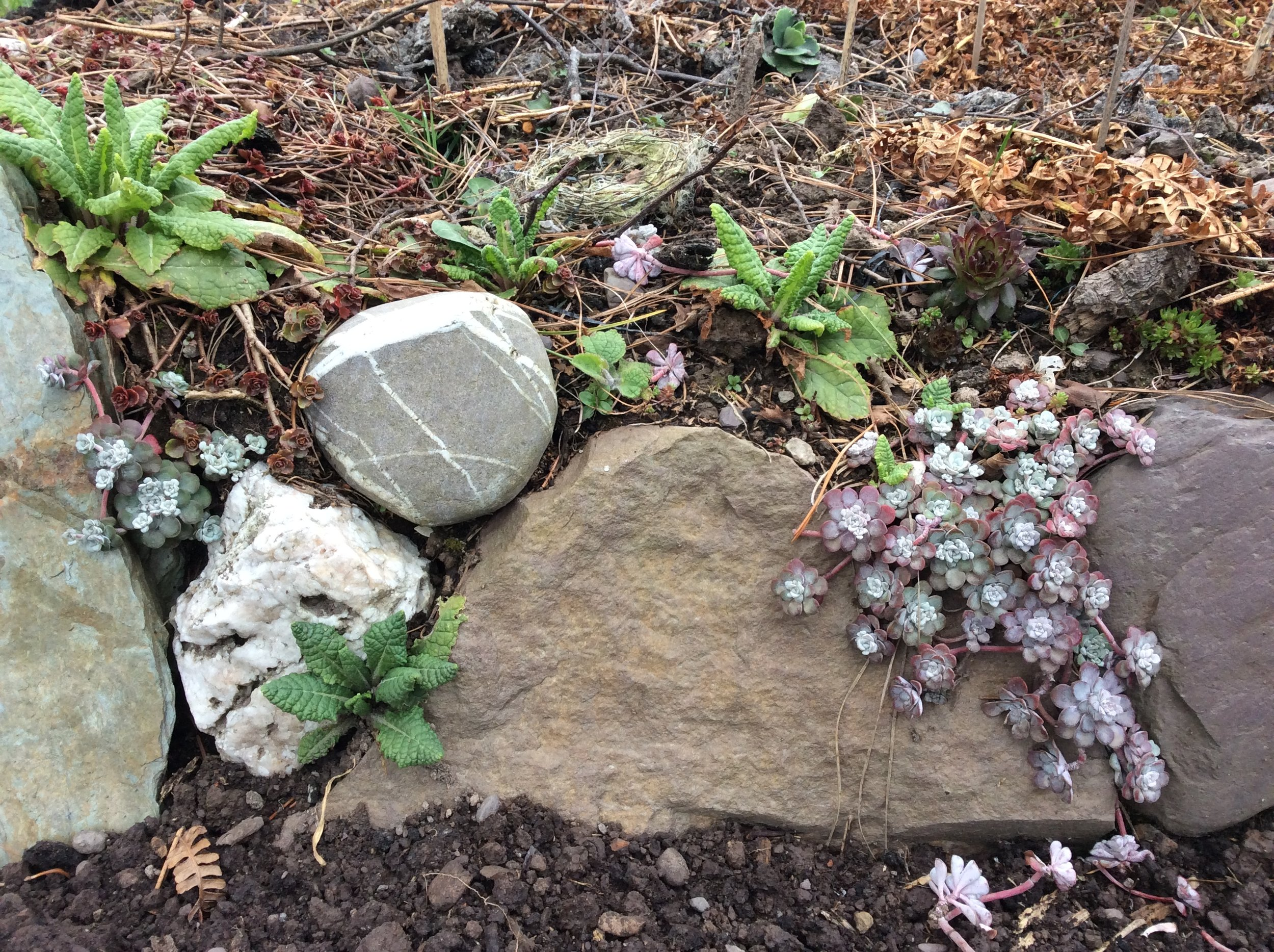 Succulents look great in amongst stone walls