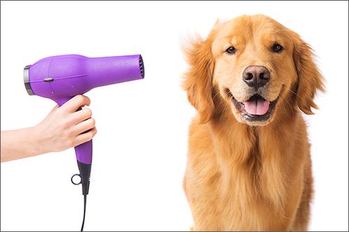 grooming-dogs-day-inn-rva