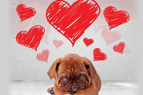 dogs-day-inn-daycare-richmond-va