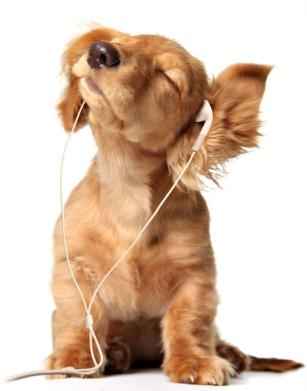 day-care-dogs-day-inn-richmond-va