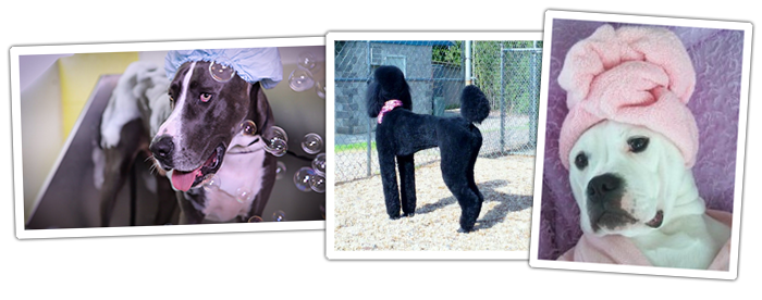 grooming-pets-dogs-day-inn-richmond-va.png