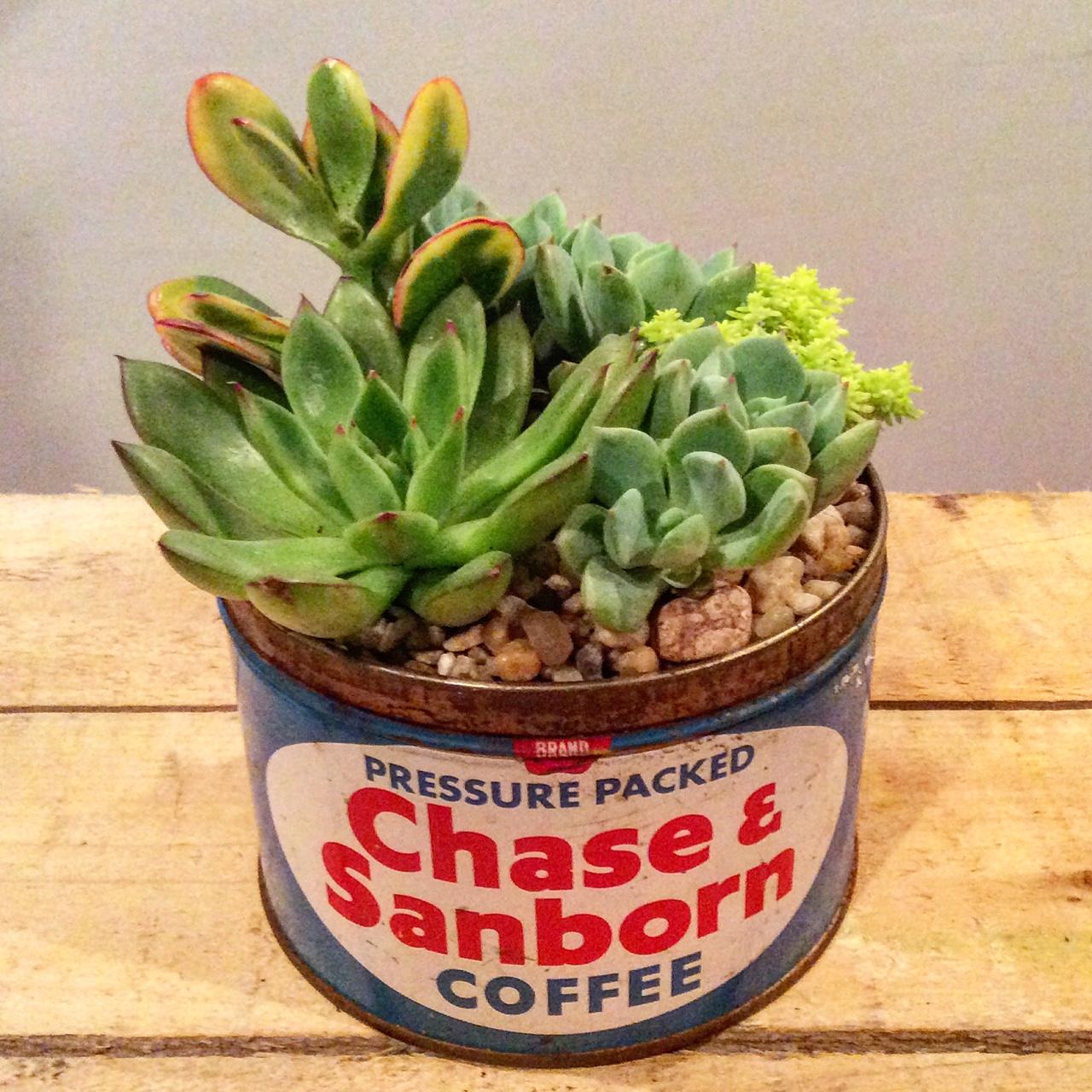 VINTAGE CHASE & SANBORN COFFEE TIN