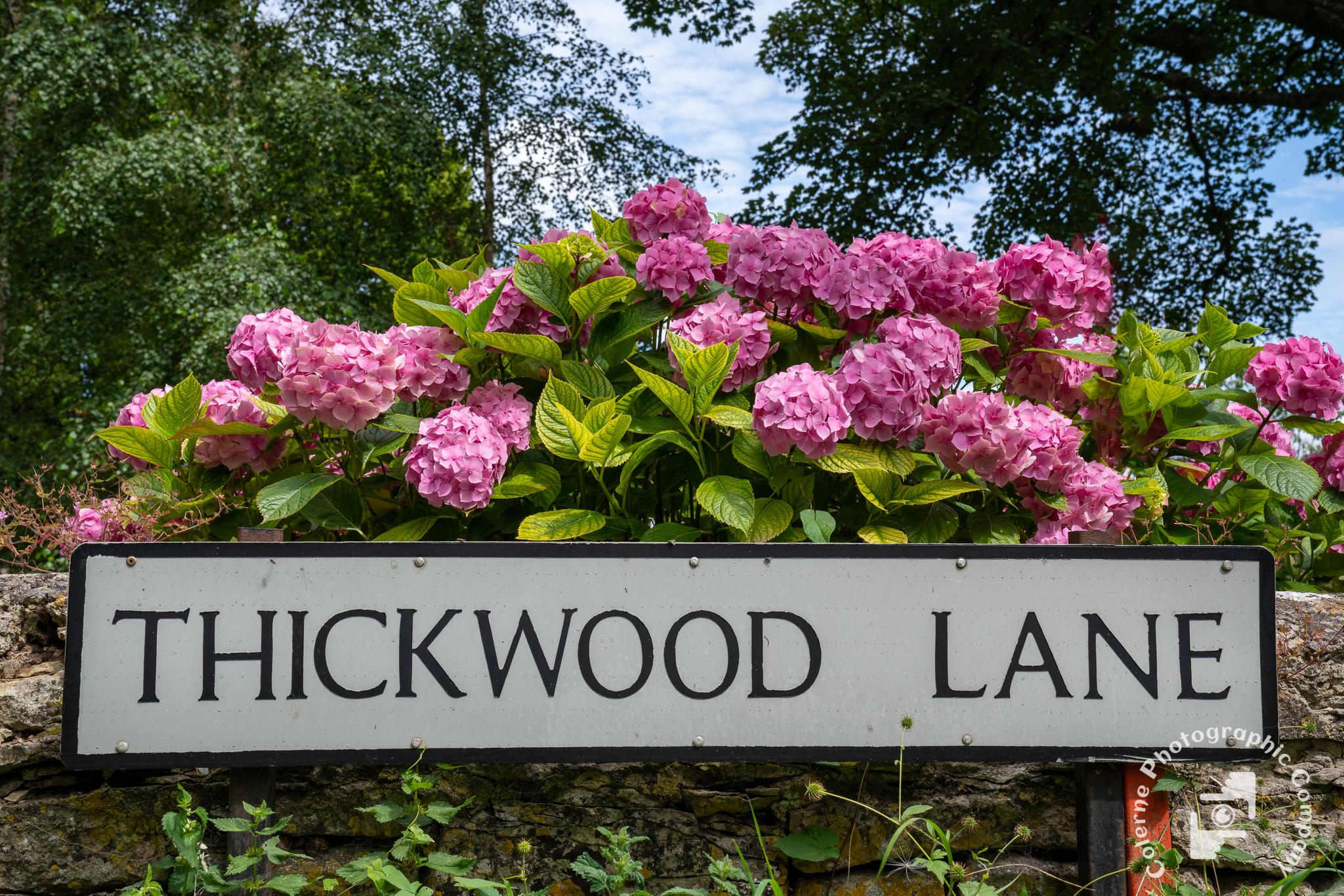 20190808 Thickwood_0006.jpg