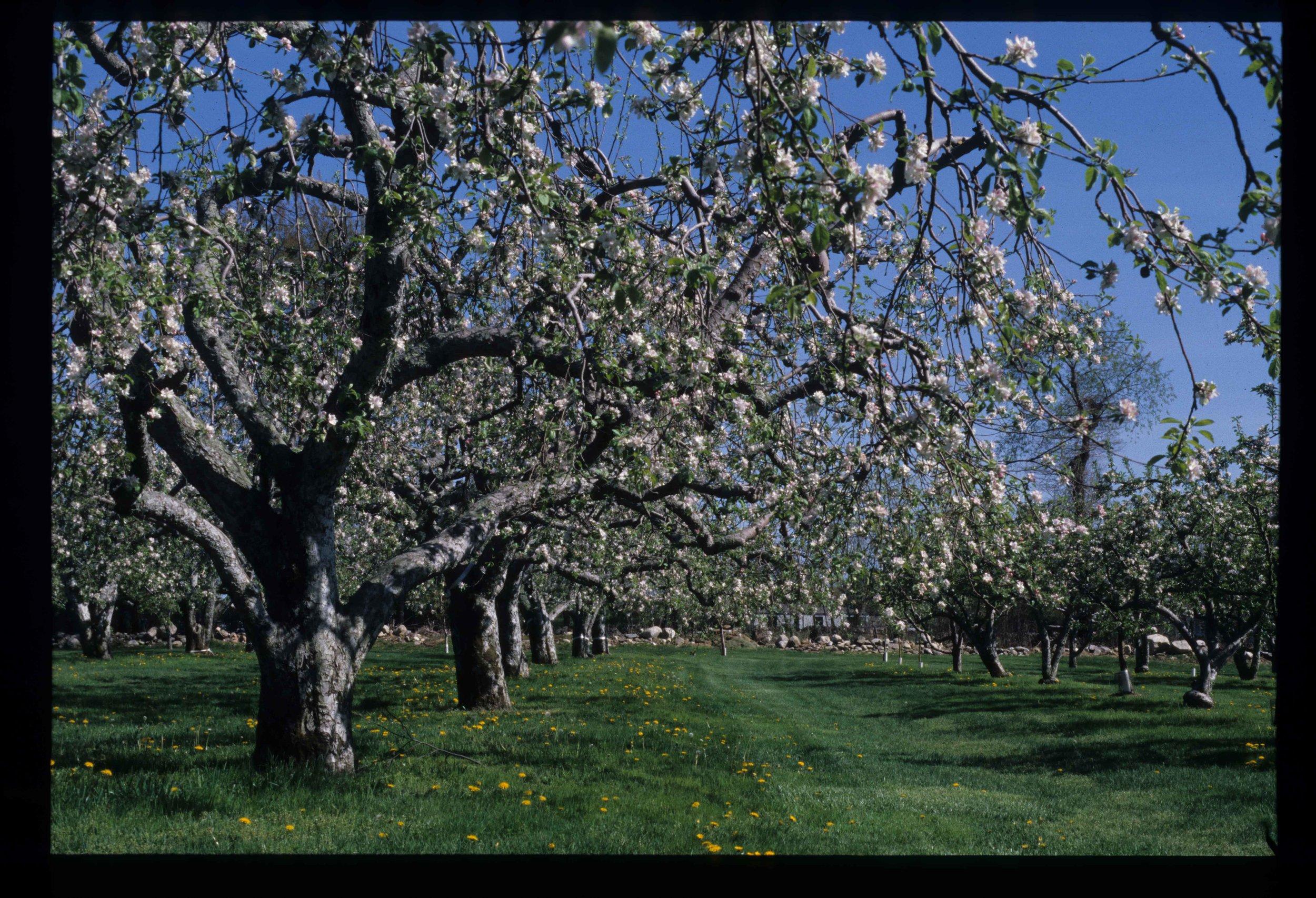 Orchard Scan Image 6.jpg
