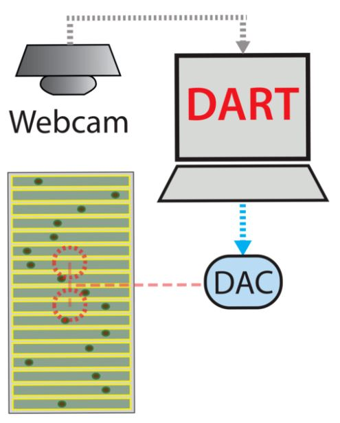 DART SETUP SCHEMATIC  - A DART compatible experimentation platform is monitored via a camera that allows the computer to detect the positions of the flies. Strong vibration motors under the platform are controlled by DART via a Digital to Analogue interface (DAC).