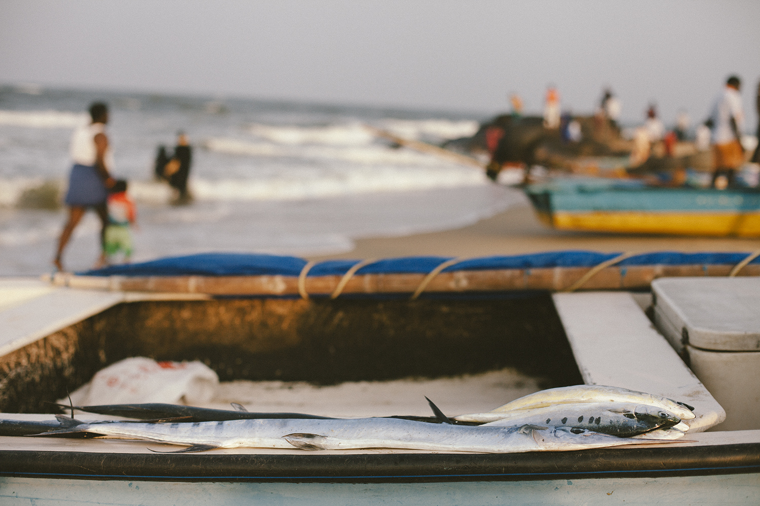 Fresh fish for sale directly from the fishermen's boat