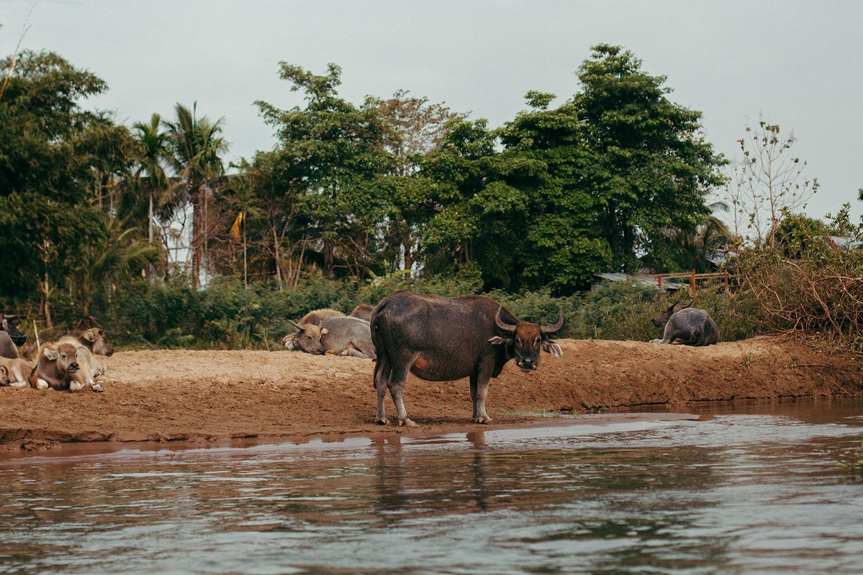 buffallo don det laos handzaround