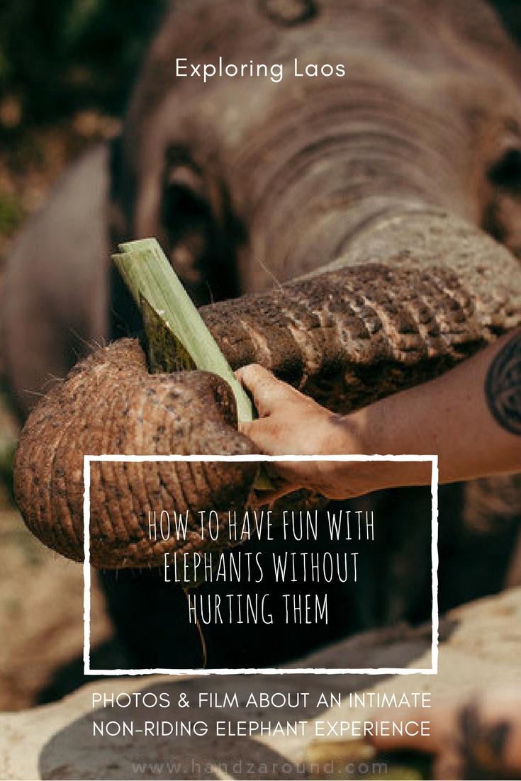 laos elephant experience handzaround feeding elephants