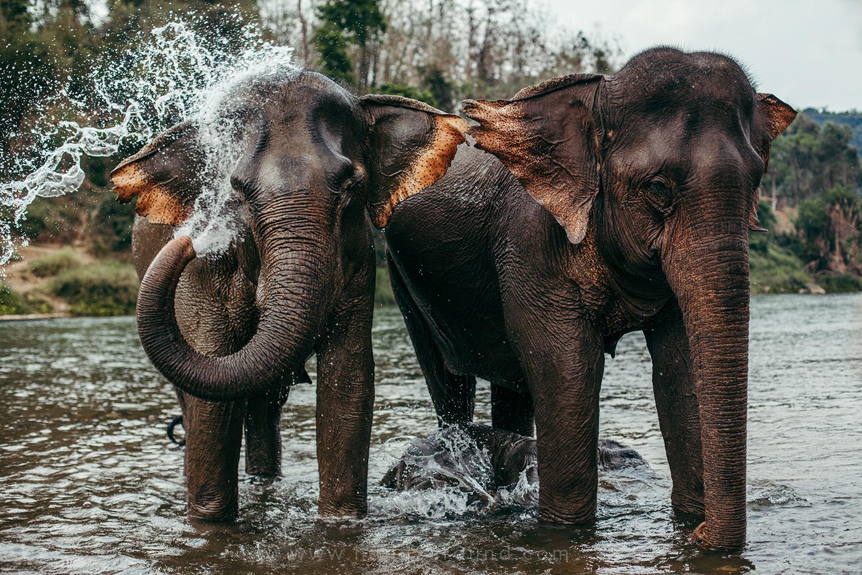 Elephants from Manda Lao Elephant Sanctuary