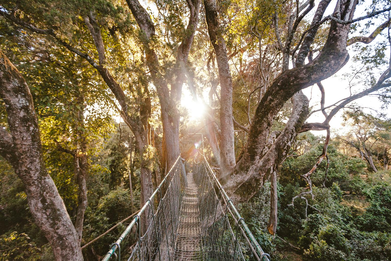 NGARE NDARE FOREST SIEKU GLAMPING HANDZAROUND LAIKIPIA NORTH KENYA BIG FIVE NRT AFRICA CANOPY WALK
