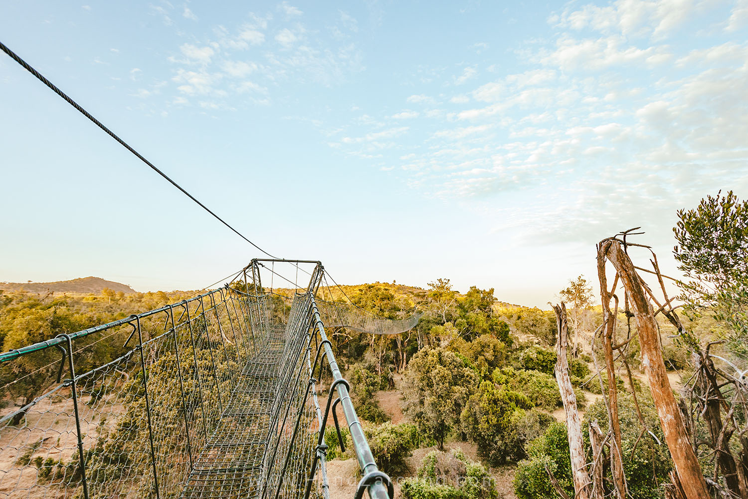 010_HANDZAROUND_NGARE_NDARE_FOREST_CANOPY_WALK_NRT_THE_BIG_NORTH_LAIKIPIA_KENYA_AFRICA.jpg