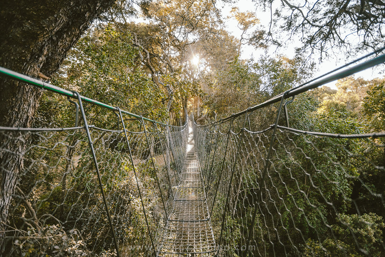 006_HANDZAROUND_NGARE_NDARE_FOREST_CANOPY_WALK_NRT_THE_BIG_NORTH_LAIKIPIA_KENYA_AFRICA.jpg