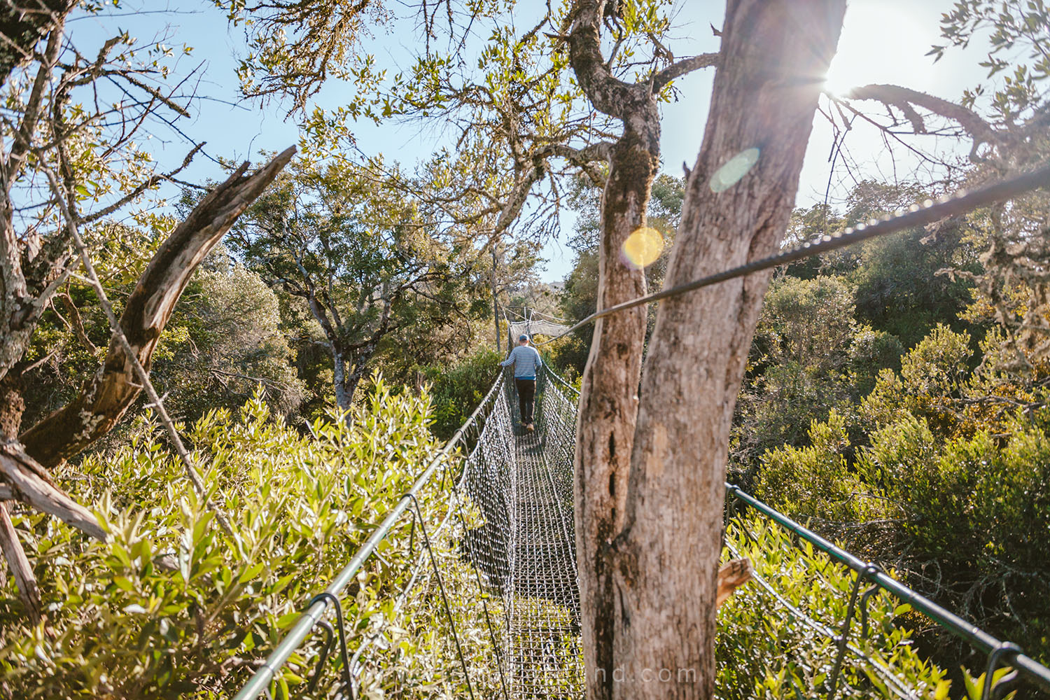 005_HANDZAROUND_NGARE_NDARE_FOREST_CANOPY_WALK_NRT_THE_BIG_NORTH_LAIKIPIA_KENYA_AFRICA.jpg