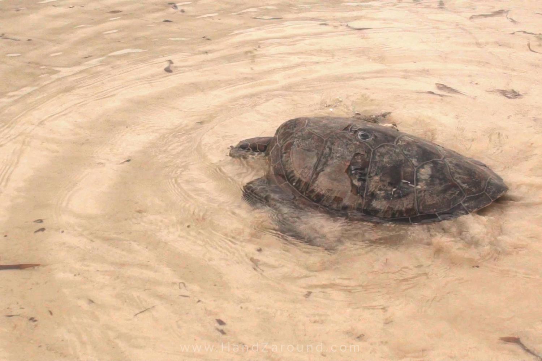 048_Things_To_Do_In_Watamu_HandZaround_Kenya_Coast_Indian_Ocean_Watamu_Treehouse_Turtle_Watch_Crab_Shack.jpg