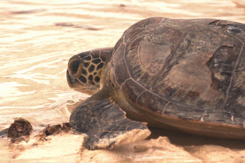 047_Things_To_Do_In_Watamu_HandZaround_Kenya_Coast_Indian_Ocean_Watamu_Treehouse_Turtle_Watch_Crab_Shack.jpg