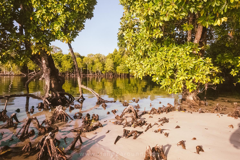 046_Things_To_Do_In_Watamu_HandZaround_Kenya_Coast_Indian_Ocean_Watamu_Treehouse_Turtle_Watch_Crab_Shack.jpg
