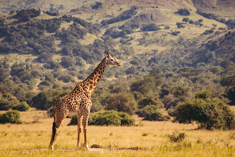 136_HandZaround_Akagera_African_Parks_Rwanda_East_Africa.jpg