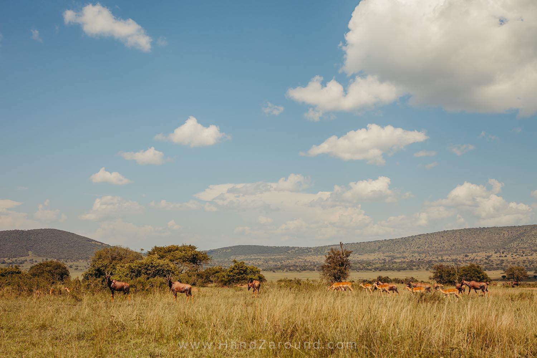 089_HandZaround_Akagera_African_Parks_Rwanda_East_Africa.jpg